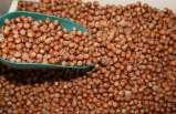 8 aylık fındık ihracatı 210 bin tona ulaştı