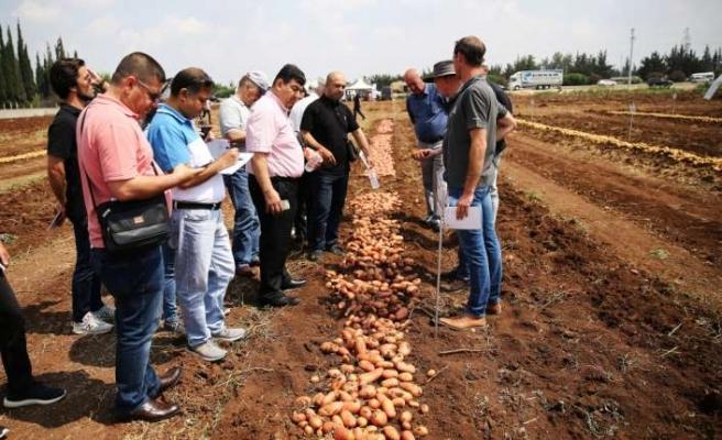"""Yerli ve milli patates  """"Nahita"""" gün ışığına çıktı"""