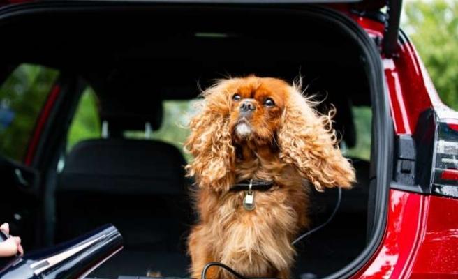 Dünya Köpek Günü'ne Ford'dan anlamlı destek