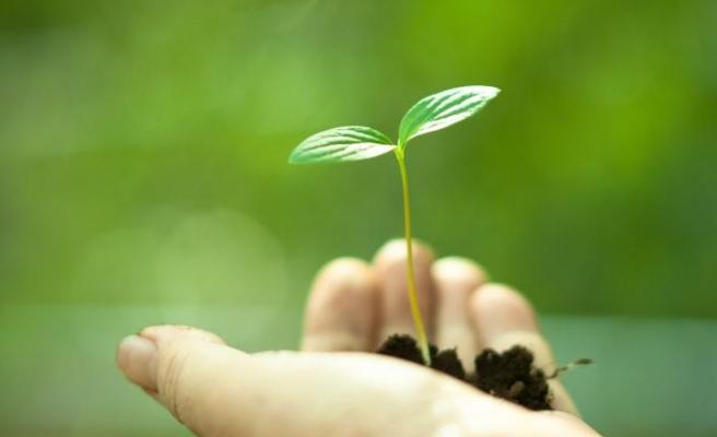 Biyolojik çeşitlilik hedefi için dört aşamalı strateji belirledi