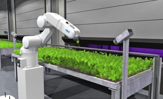 Omron'un otomasyon çözümleri dikey tarımın önünü açıyor