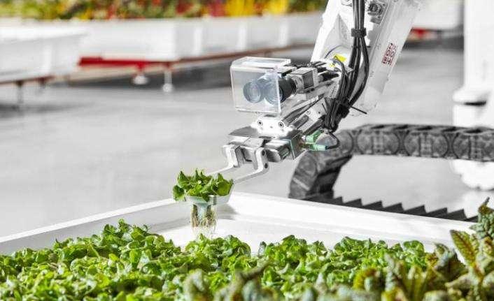 Robotlar işletiyor, markette satılıyor