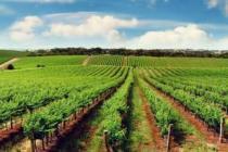 Tarım ürünleri ihracatına Tarım OSB dopingi