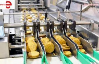 Gıda sektörü rulmanı nasıl seçiyor?