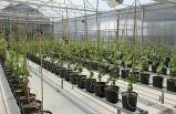 Türkiye'nin ilk kapalı sistem üzüm bağı