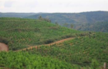 """""""Yapay ormanlar için çalışmalara başladık"""""""