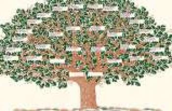E-devlet soy ağacını doğru sorgulamanın yolu nedir?